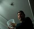 Papa attrape une araignée